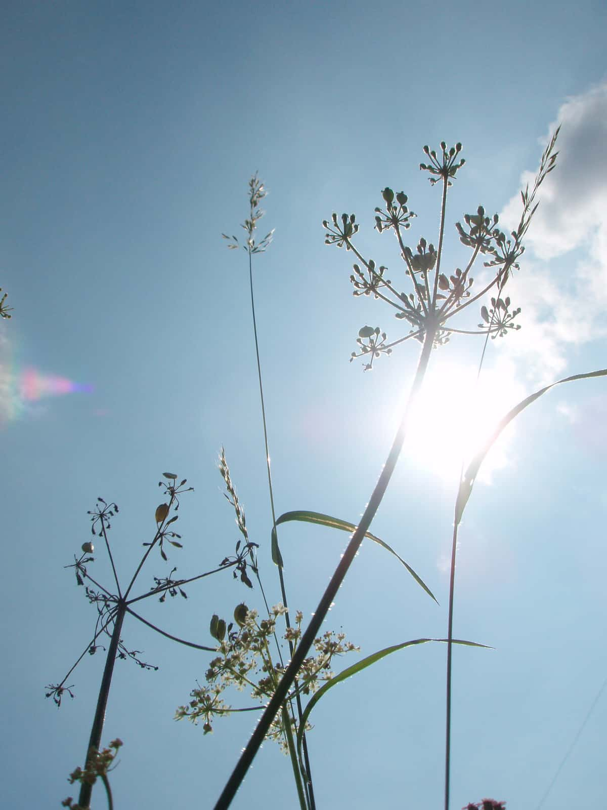 Reconnection cursus brengt innerlijke rust en life purpose. Dat gevoel straalt deze foto van een bloem met gras stengel tegen een blauwe serene hemel uit